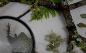 magnified_lichen