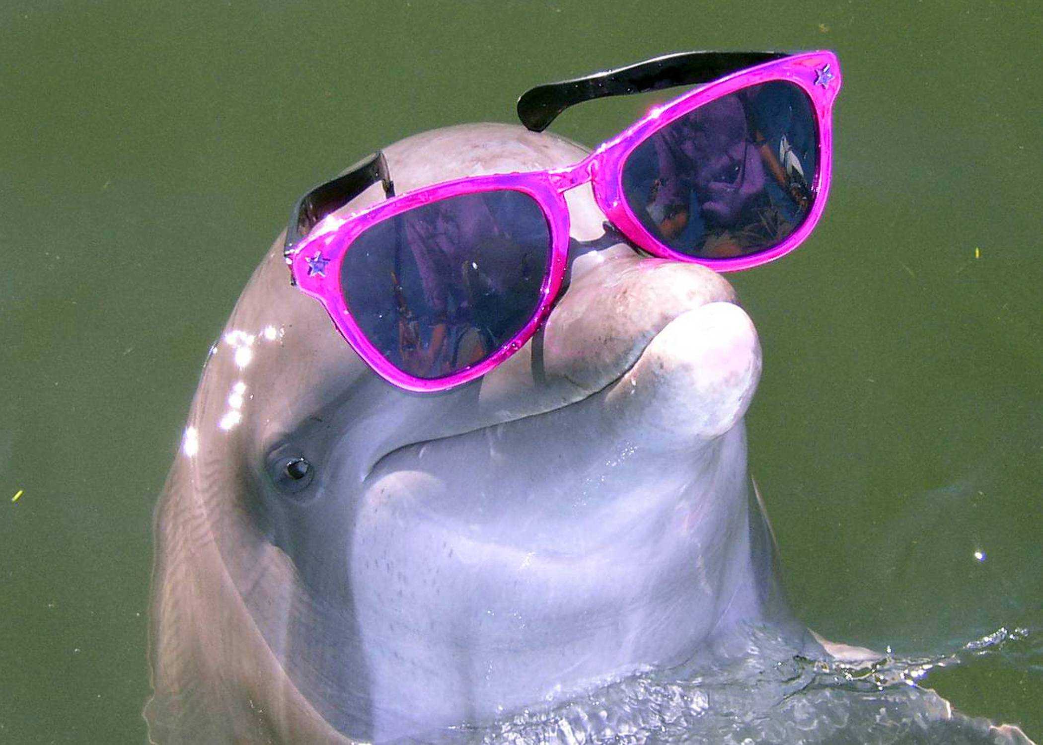 Kids Dolphin Facts