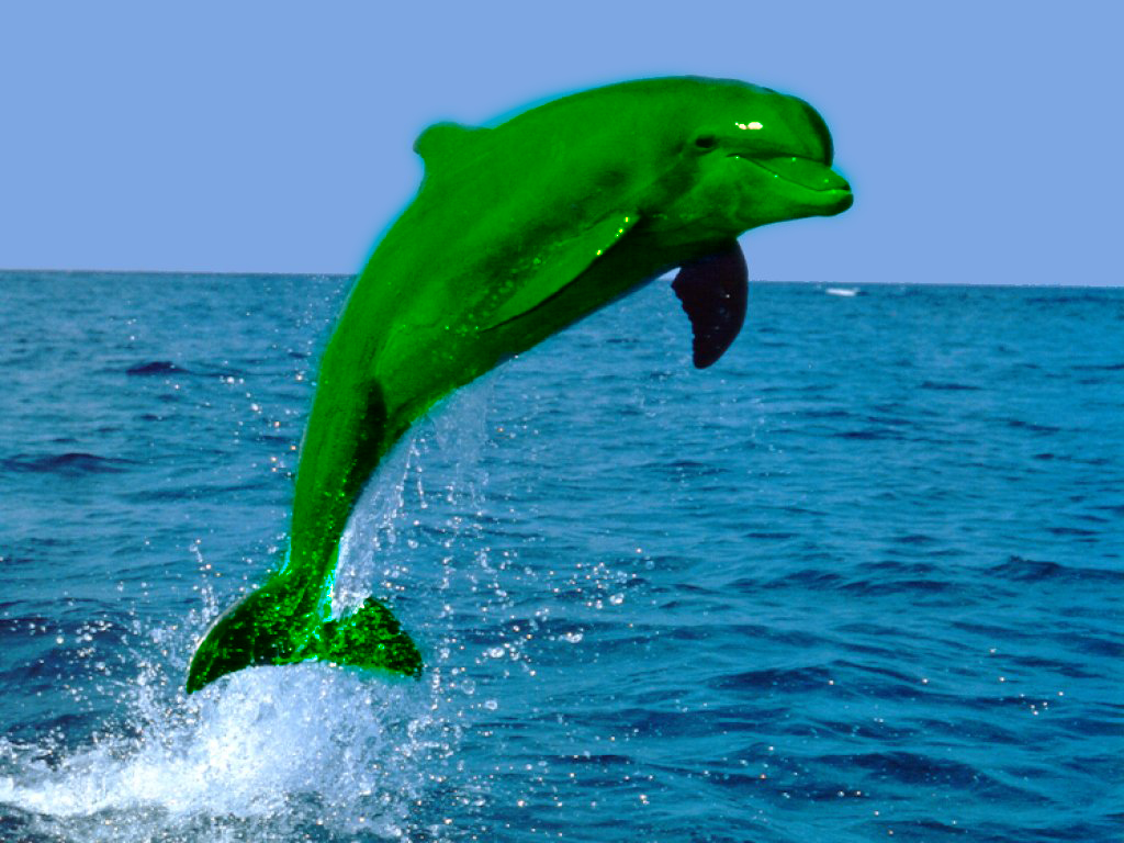 Real Blue Dolphin