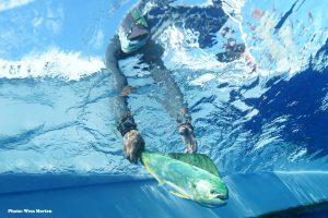 mahi-mahi, dolphinfish, dorado, dolphin, mahi
