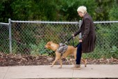 Obedience Coaching Is Nice For Your Canine