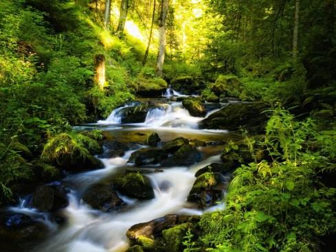 Живописный лесной водопад