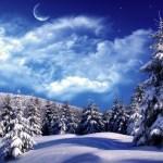 Зимний еловый лес