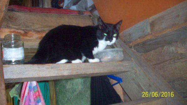 Кот Боня ест