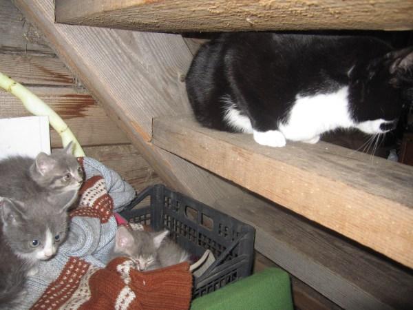 Три котёнка и Боня