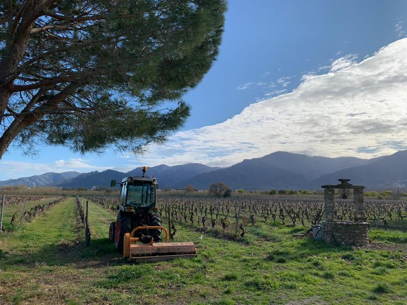 Vigne, tracteur et puit du Bisconte
