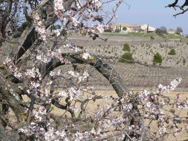 Photos - Le domaine du viala fleurie