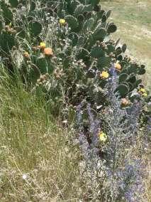 Photos - Cactus fleurie au Viala