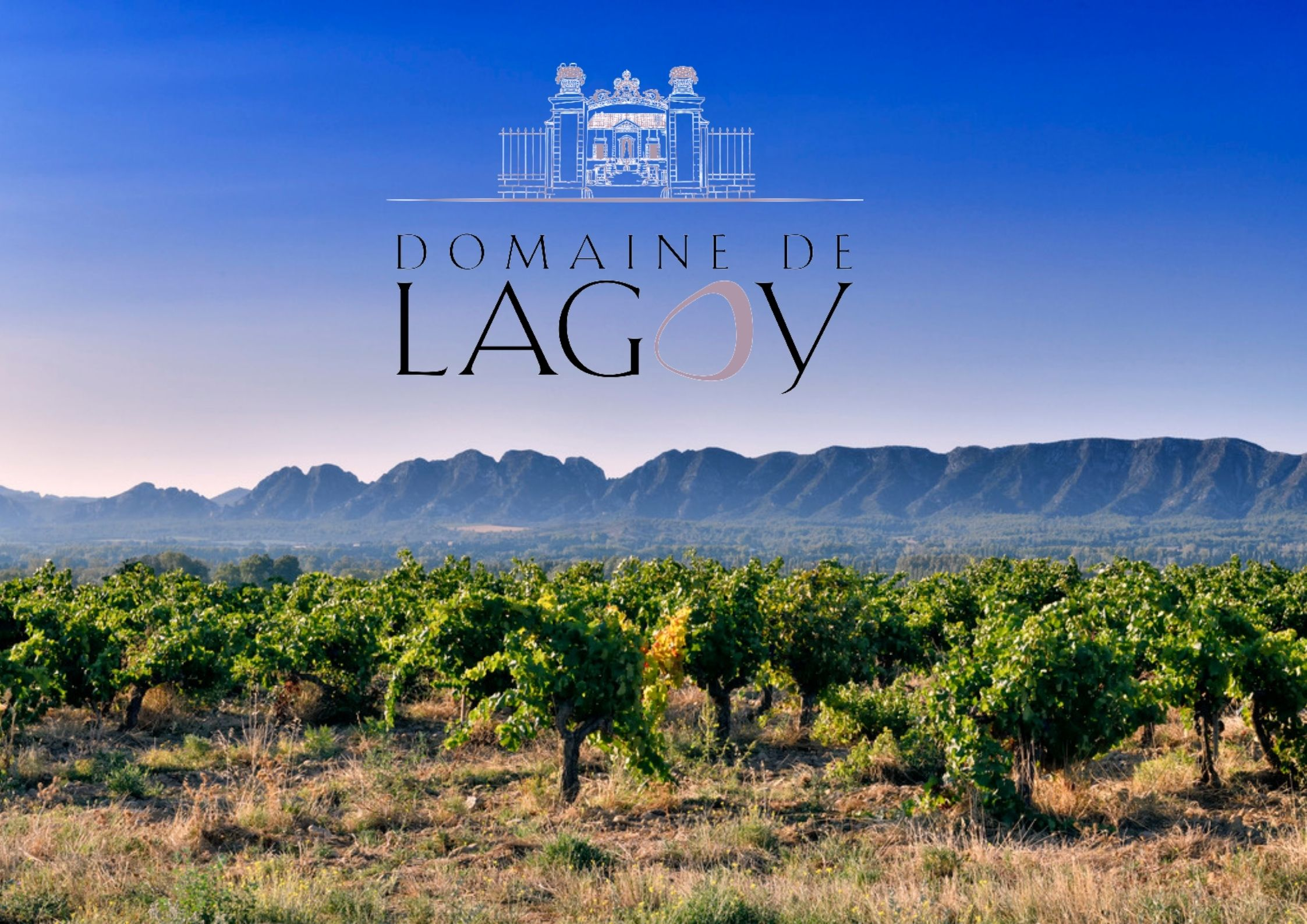 Read more about the article Reportage photographique Vendanges Domaine de Lagoy 2021