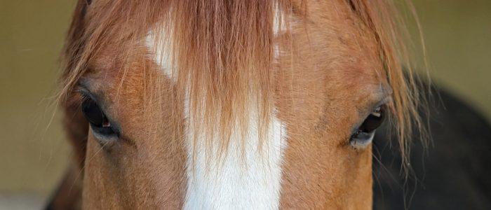 Xrace aventure Paddock paradise grand gîte bédoin location vacances mont ventoux chevaux nature campagne piscine abrite abriteli airbn tripadvisore tripadviso randonnée équestre ventoux sud