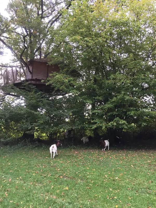 Cabanes au dessus des chèvres