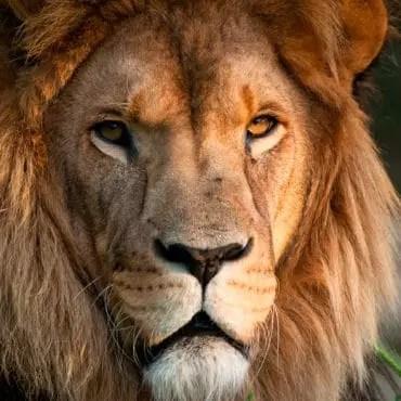 Lion-le refuge de l'arche