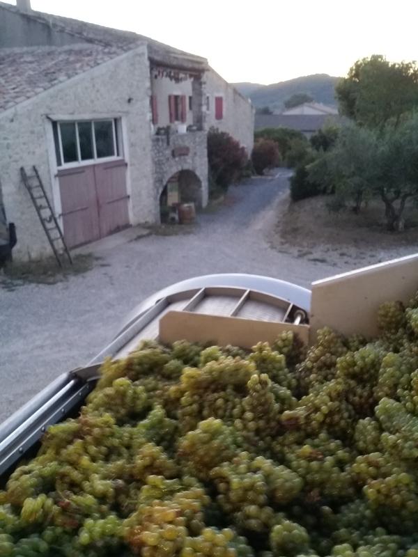 Vignerons Alba La Romaine