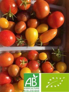 barquette de tomates cockatail multi-variétés
