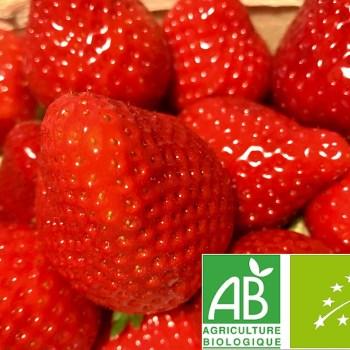 belles fraises bio