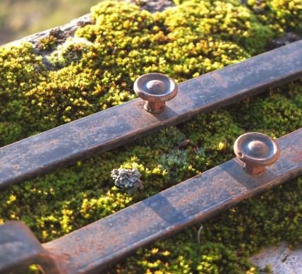 Metal on Moss on Terrace
