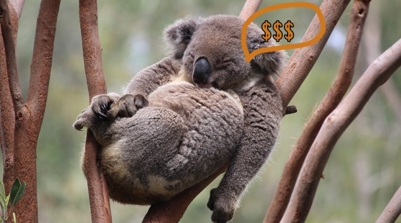 koala bedding mattress