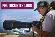 PhotoContest.org, domain name for sale