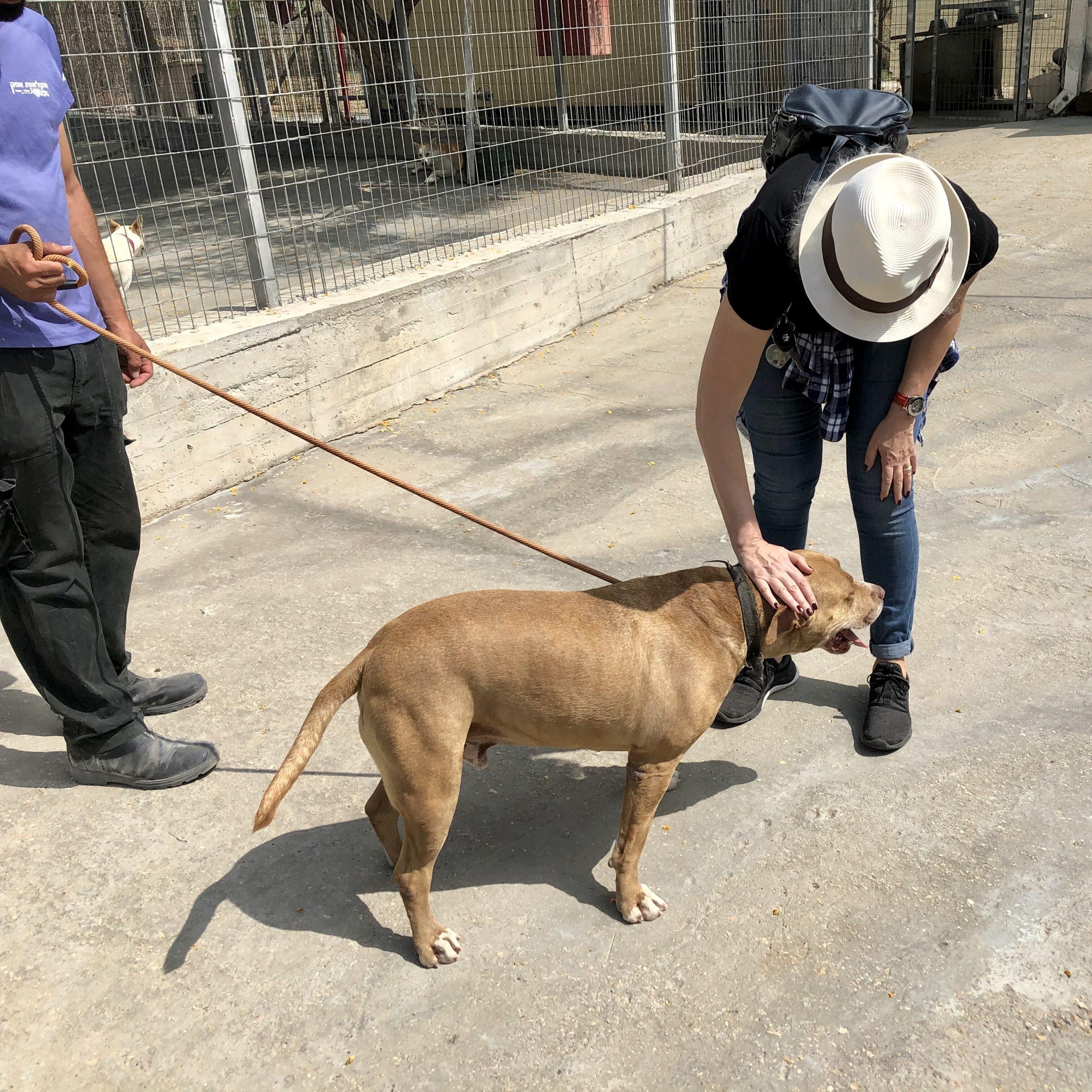 ADT.org: Adopt a Pet