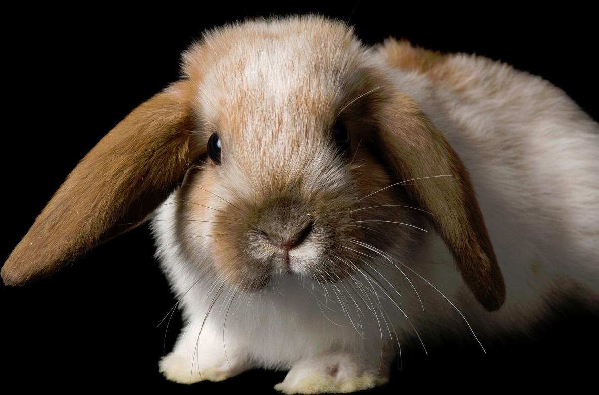bunnydread