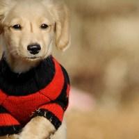 Главная энциклопедия о домашних животных
