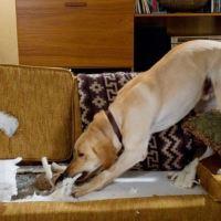 Чем занять собаку: 7 простых игр, спасающих дом от разрухи!
