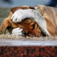 10 собачьих фобий и страхов: причины страха у собак