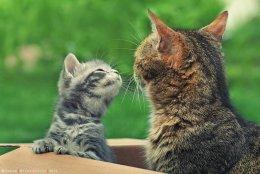 Пять мифов о кошках 4