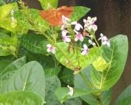 Many butterfly species visit the villa