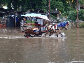 Some inventive folks replaced taxis with horses to make some cash in the flood.