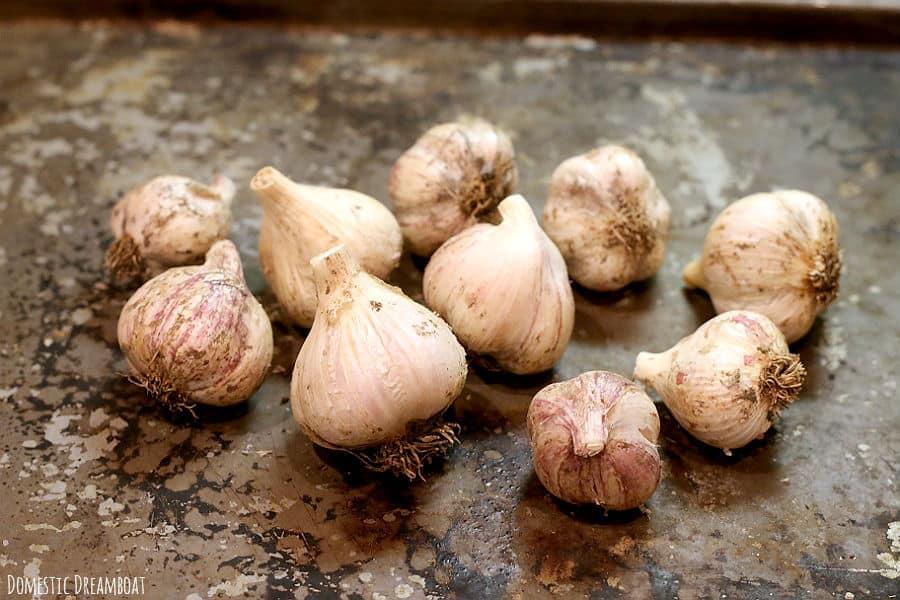 Trimmed garlic