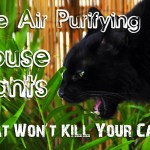 Five Air Purifying House Plants That Won't Kill Your Cat