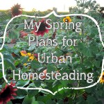 My Spring Plans for Urban Homesteading