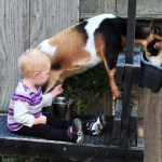 Petitioning the City of Visalia to Allow Miniature Goats as Pets