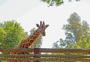 A Day at the Fresno Zoo!