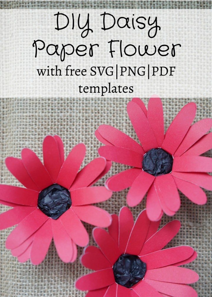 paper daisy flower plant