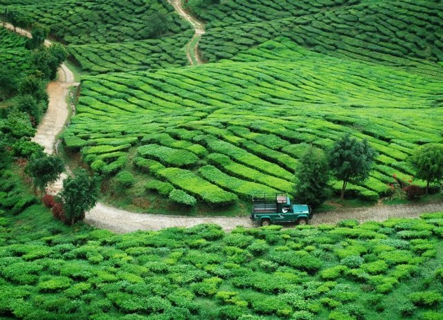 Herbaciane krajobrazy