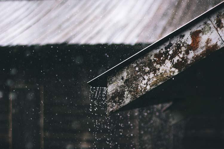 wykorzystanie wody deszczowej w ogrodzie