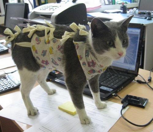 Осложнения после стерилизации у кошки шишка на животе методы лечения