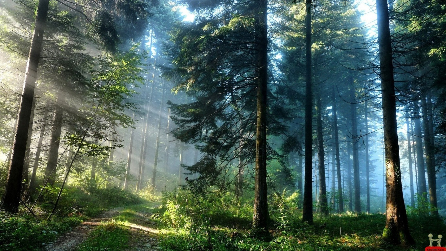Awesome Forest Natural Beautiful Hd Wallpapers Wallpaper Nature