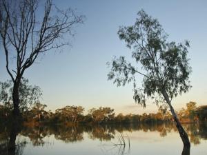 ecosistemas-humedalesmurray