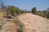 Impalas at the water hole