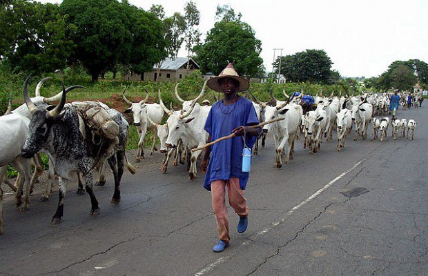 Ohanaeze youths give killer herdsmen 2 wks to quit forests in Igboland