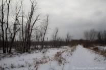 Chemin de la grande digue en hiver