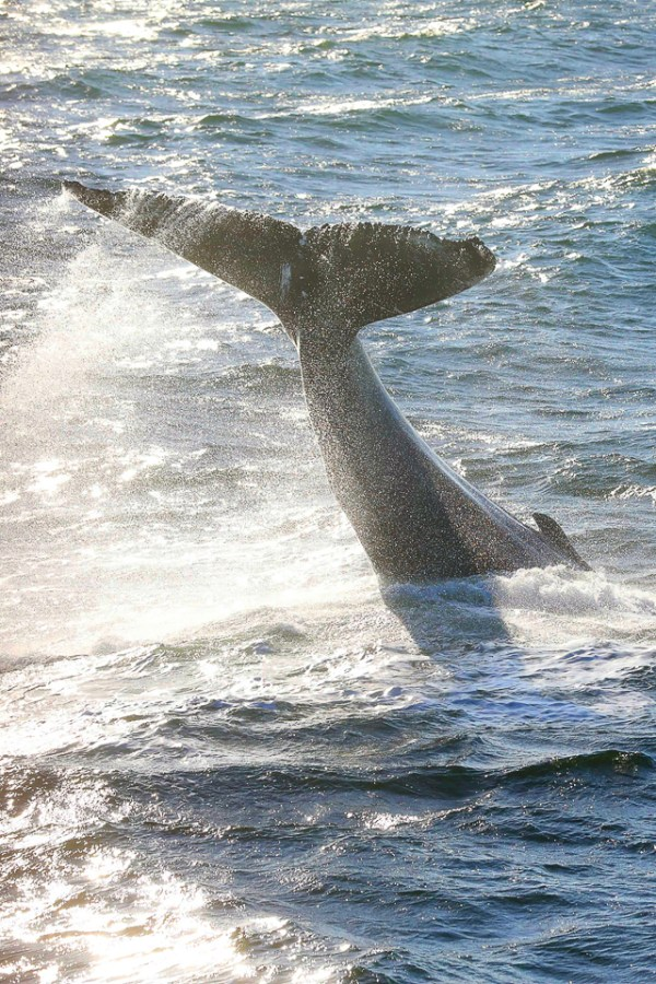 Whale Watch 001