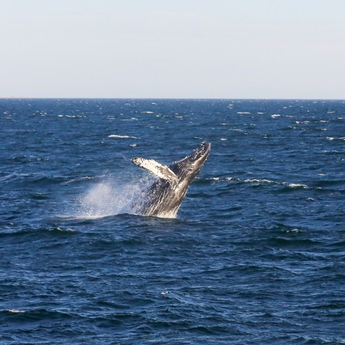 Whale Watch 004