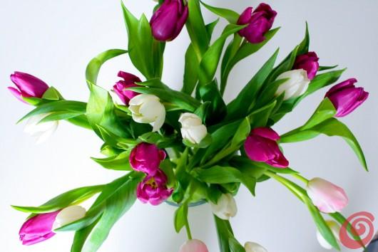 Il Fiore Del Mese Gennaio Il Tulipano Casa E Trend