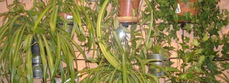 кашпо с растениями