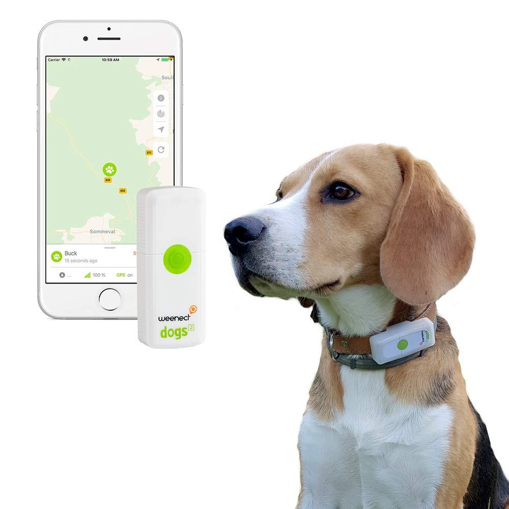 Comment protéger votre chien avec le Pawfit S