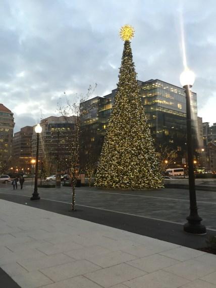 City Center tree